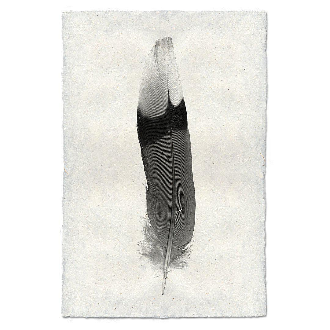 Feather Study #9 9x14 Print on Nepalese Paper
