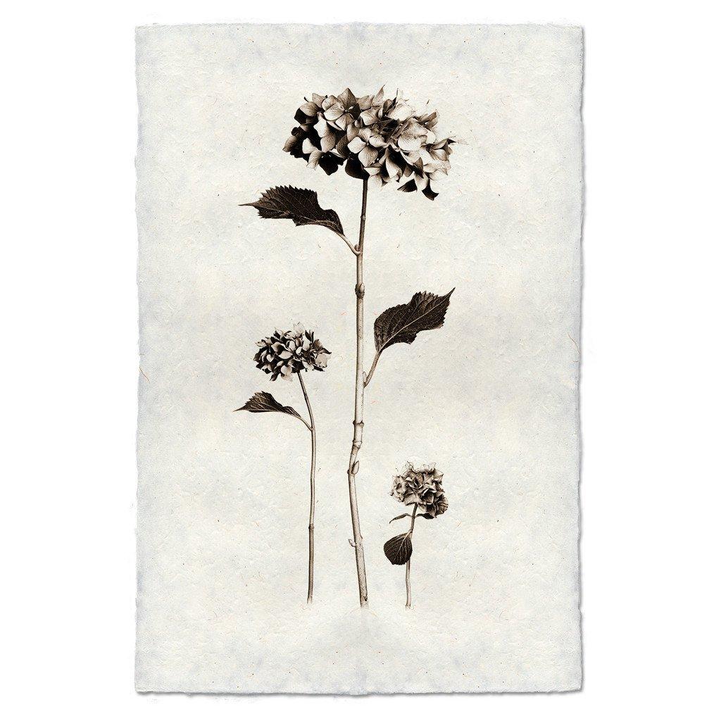 Hydrangeas 9x14 Print on Nepalese Paper