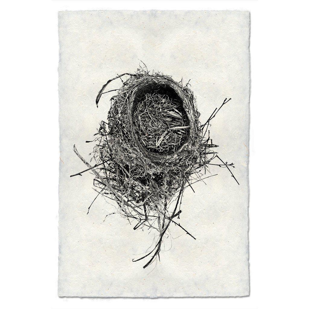Nest Study #11 20x30 Print on Nepalese Paper