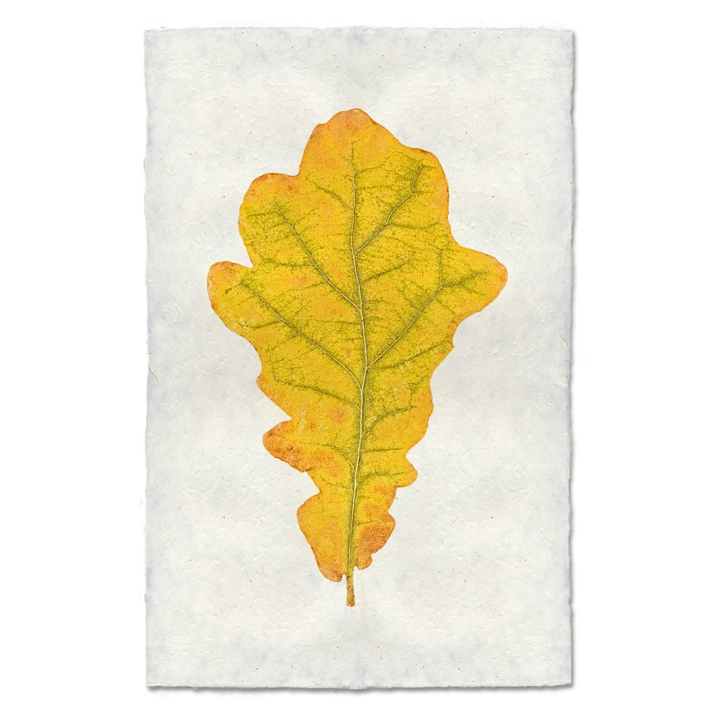 Oak Leaf 9x14 Print on Nepalese Paper