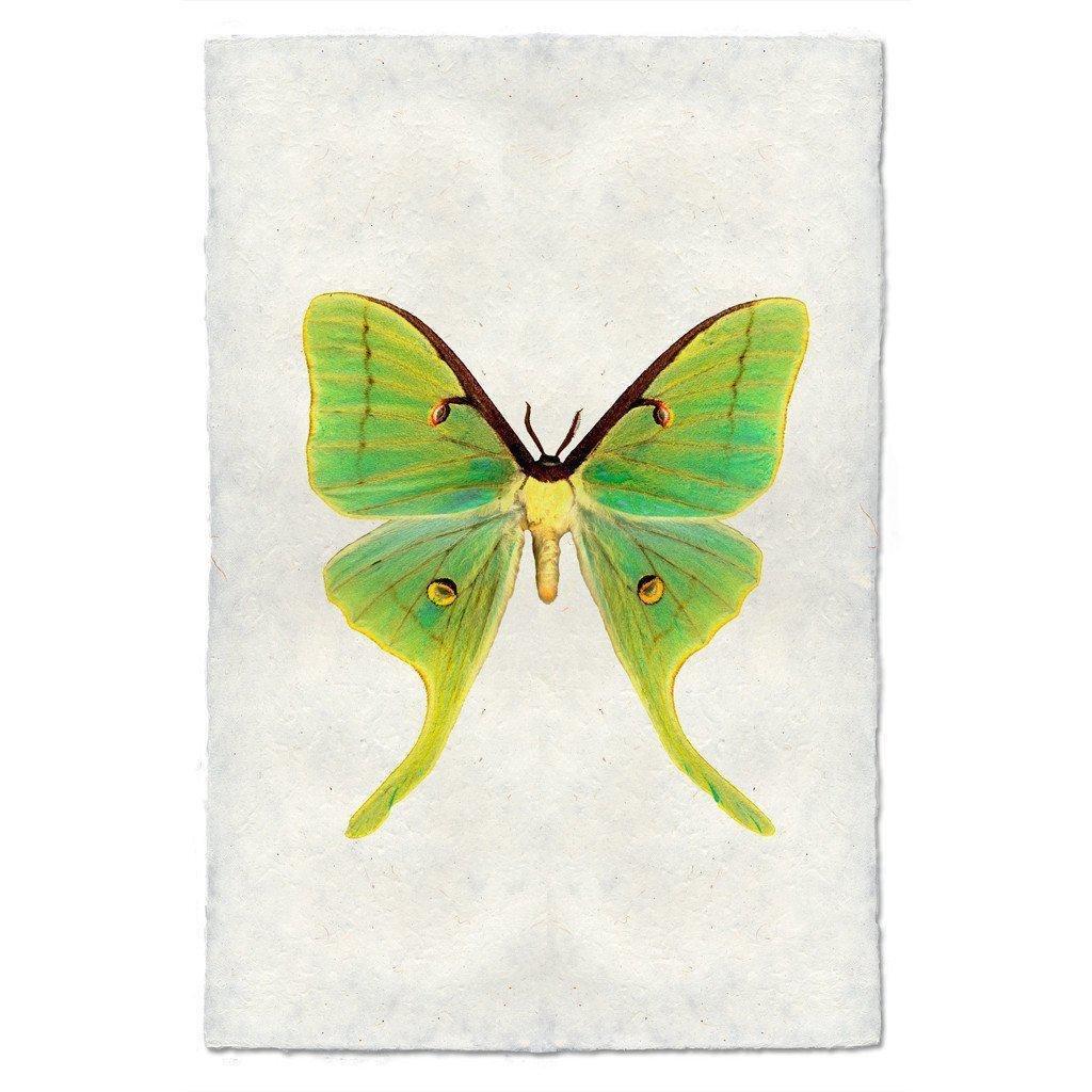 Papilionoidea #3 Print (Luna Moth)