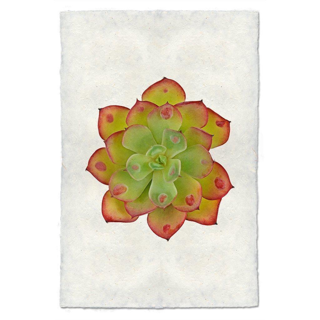 Succulent #8 Print (E. Raindrop)