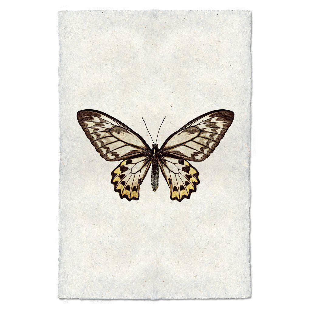 Butterfly #12 Print (Wallace's Golden Birdwing)