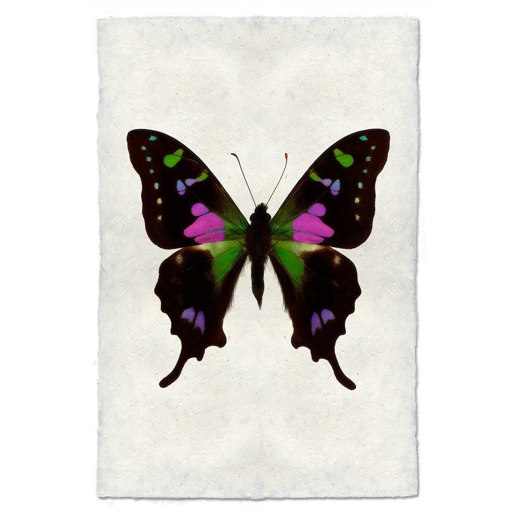 Butterfly #2 Print (Purple Swallowtail)