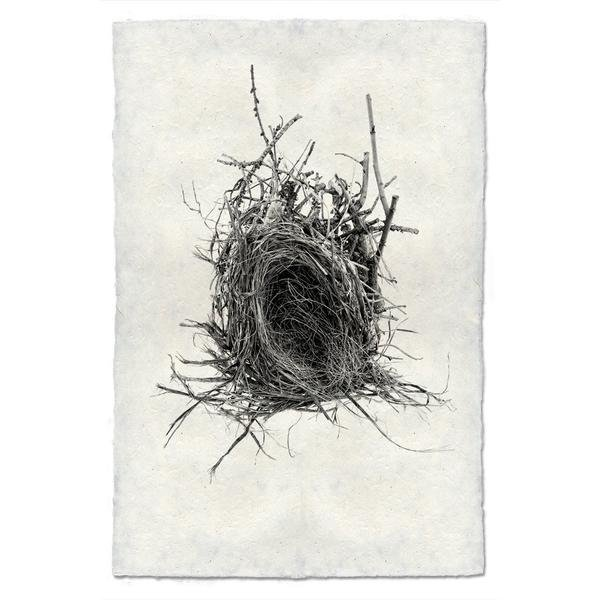 Nest Study #12 9x14 Print on Nepalese Paper