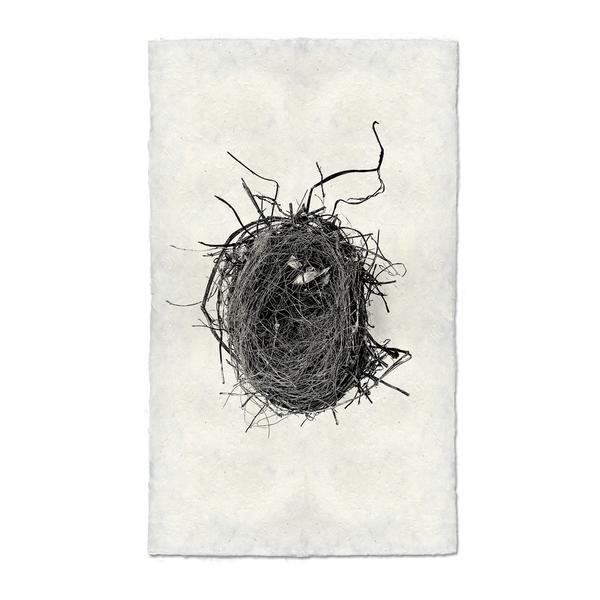 Nest Study #4 9x14 Print on Nepalese Paper