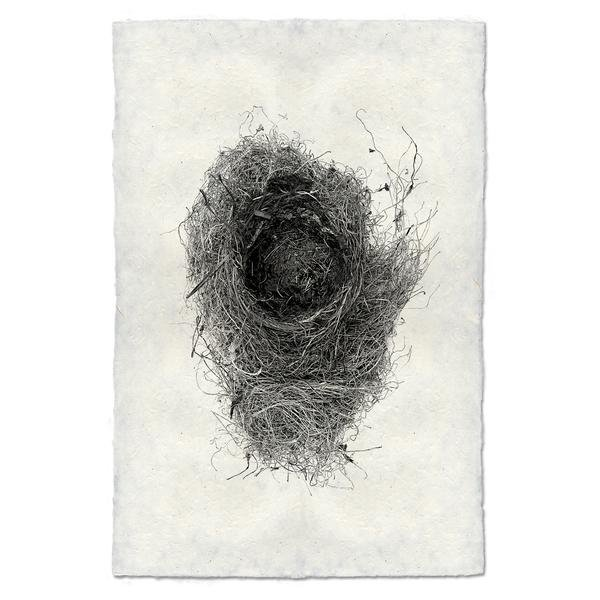 Nest Study #6 9x14 Print on Nepalese Paper