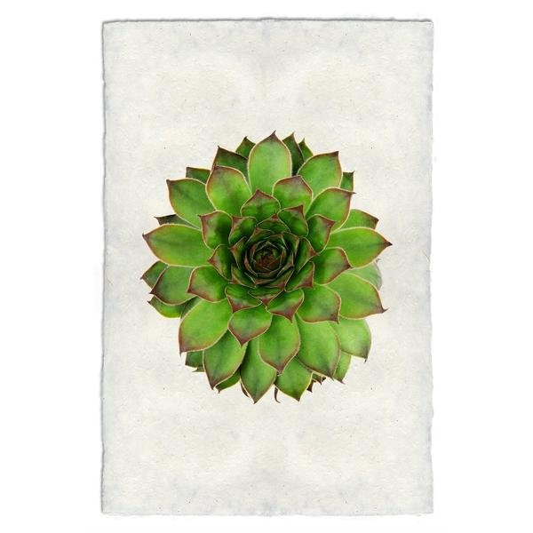Succulent #2 9x14 Print on Nepalese Paper