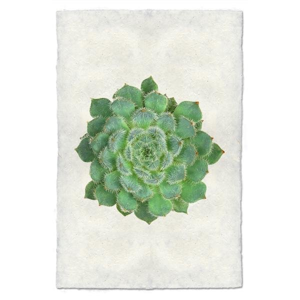 Succulent #5 9x14 Print on Nepalese Paper