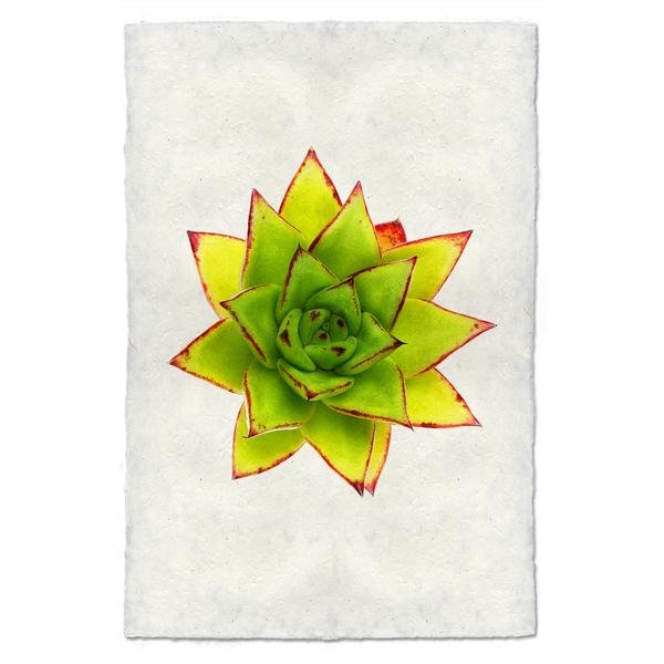 Succulent #9 9x14 Print on Nepalese Paper