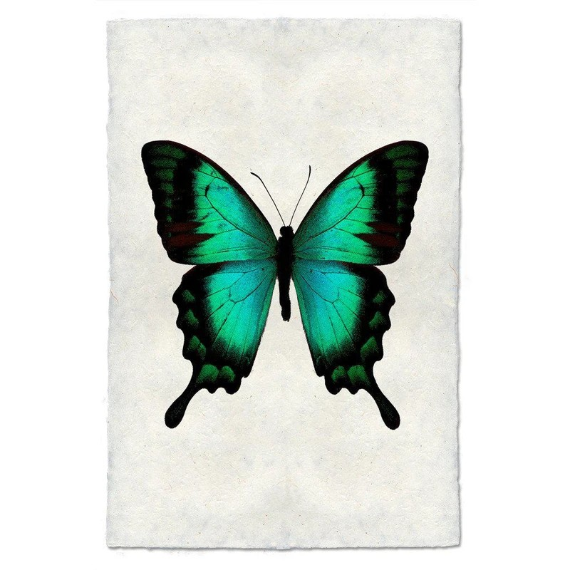 Turquoise Butterfly #1 Print