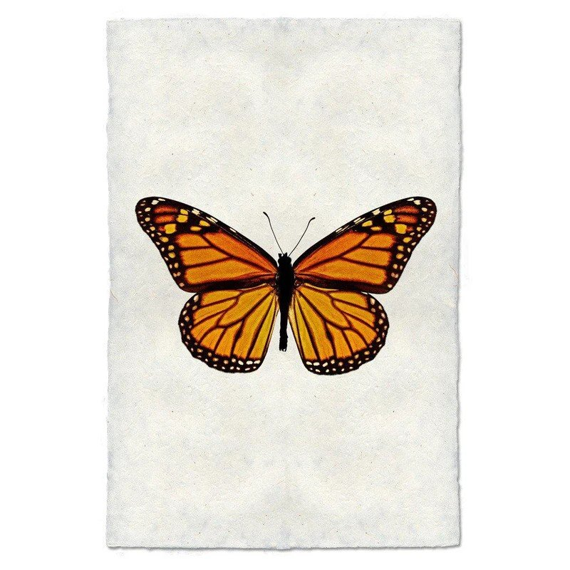 Monarch Butterfly #13 Print