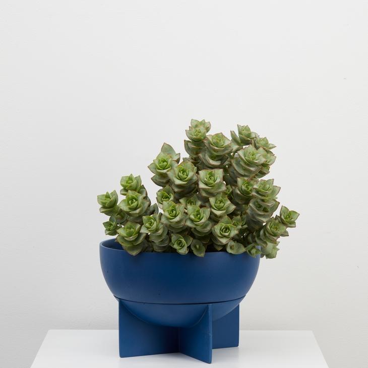 Blue Dome Eros Planter