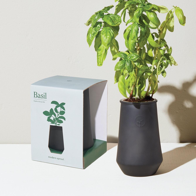 Hydro Grow Basil Kit