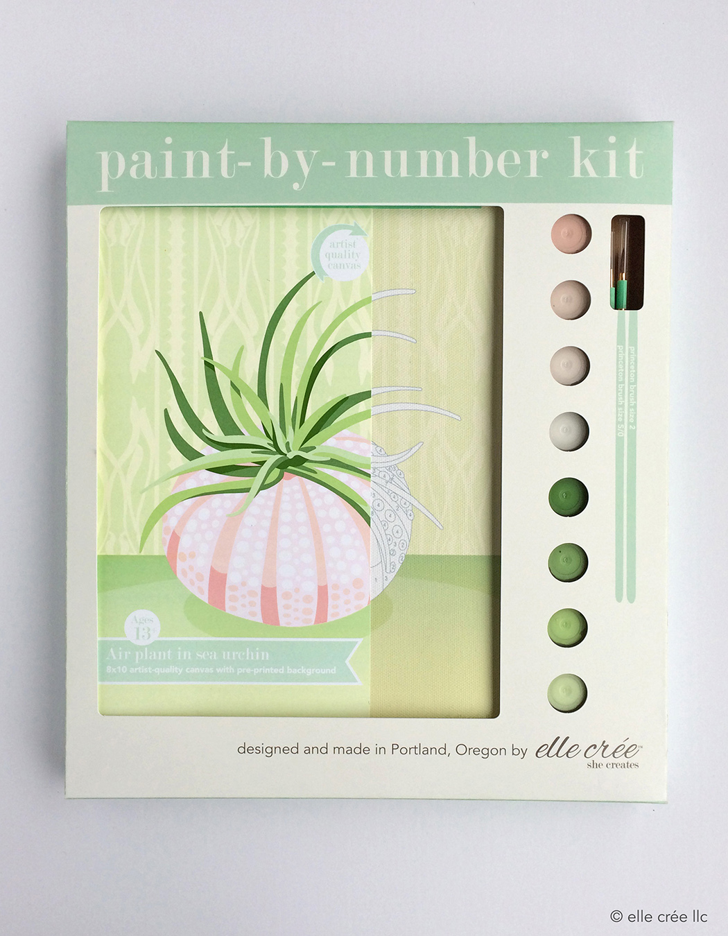 Air Plant Paint-By-Number Kit
