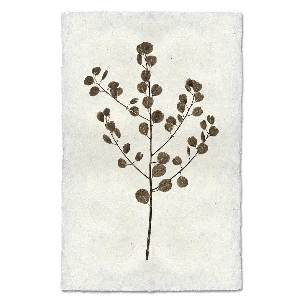 Eucalyptus #1 Print