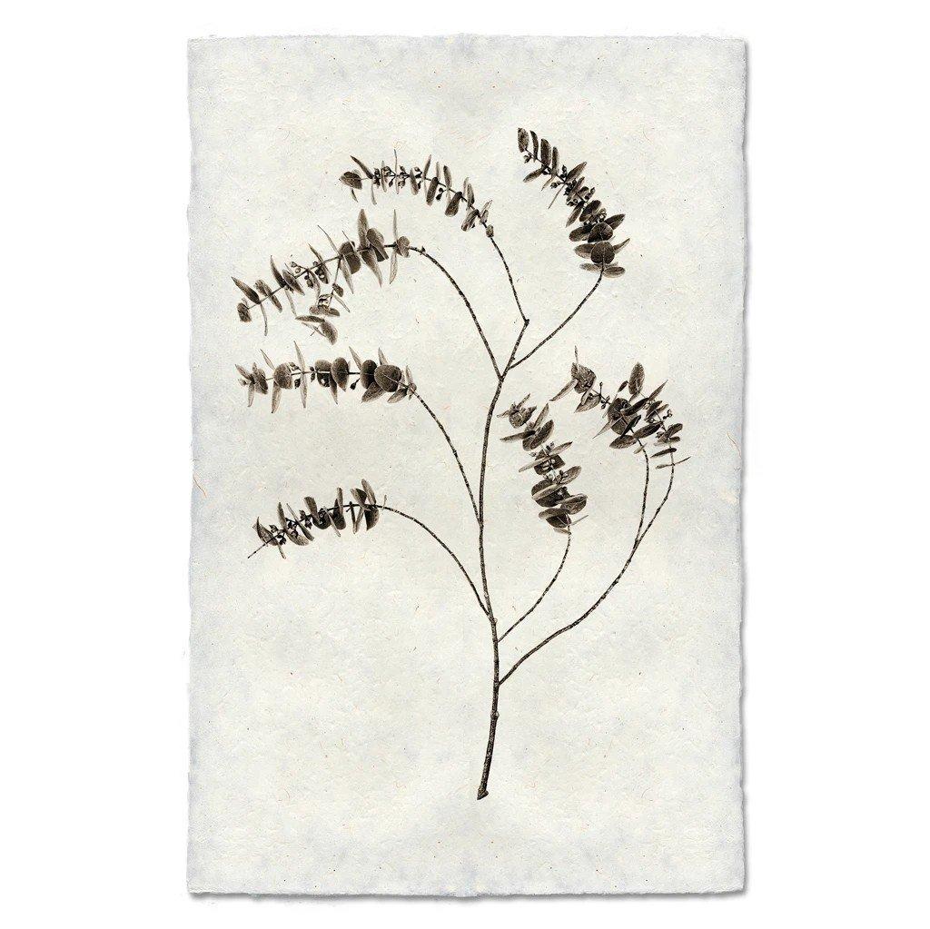 Eucalyptus #2 Print