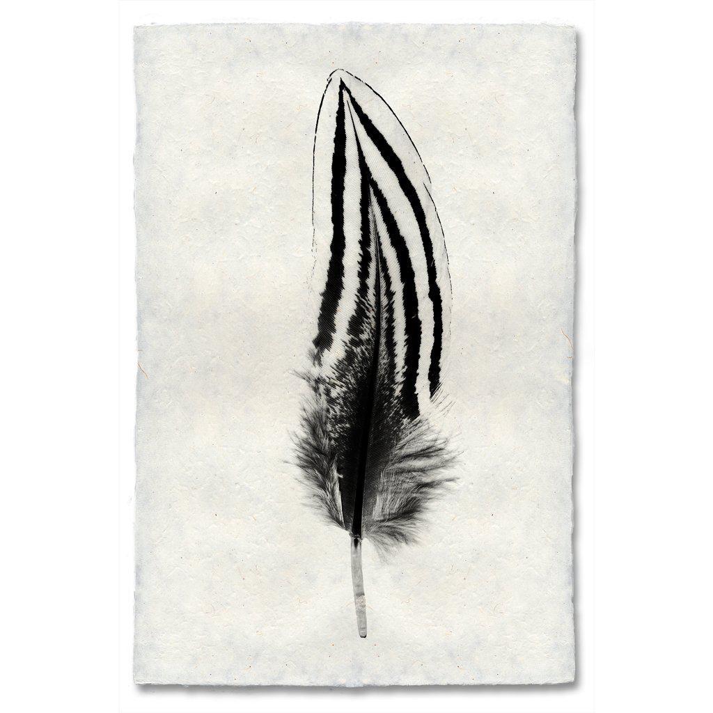 Feather Study #2 Print Silver Pheasant