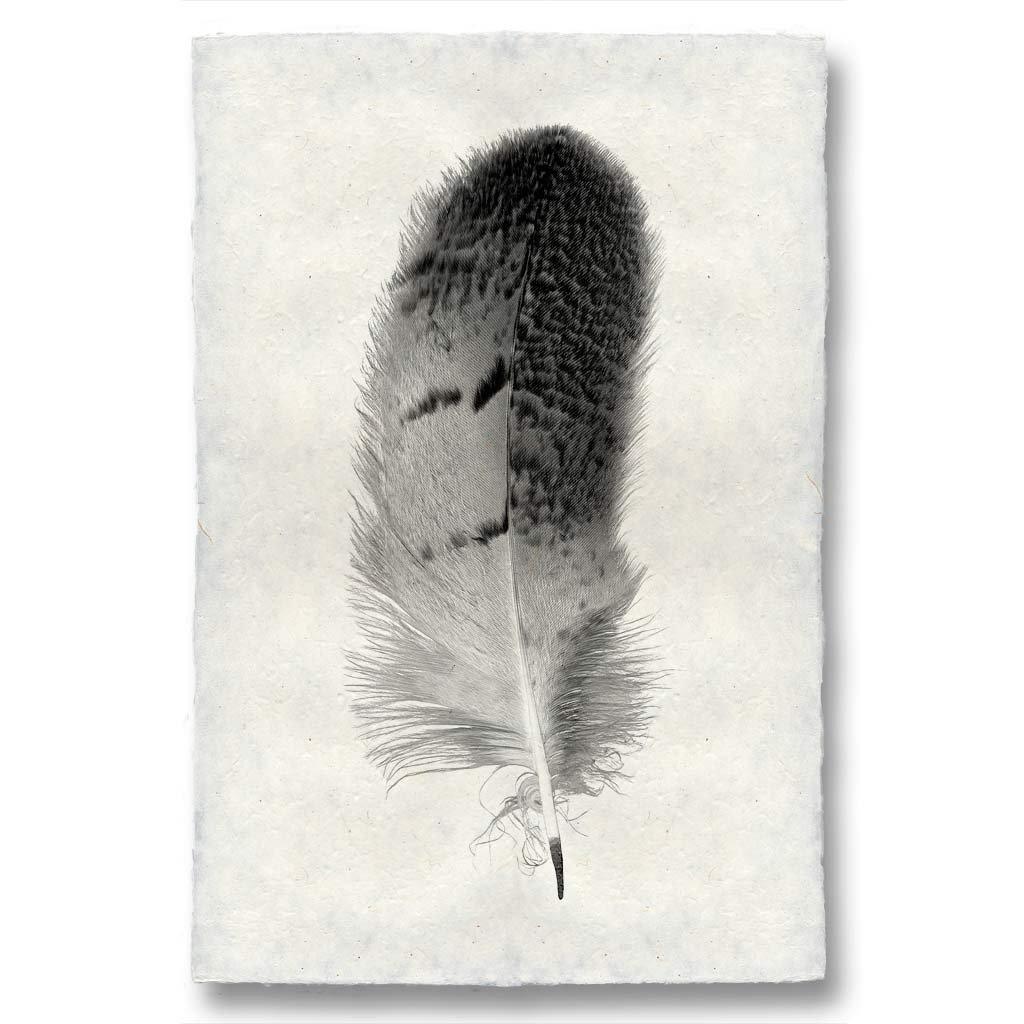 Owl Feather Study #7 Print