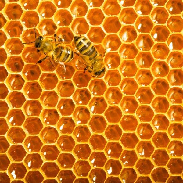 Honeybees Teaser Zen Puzzle