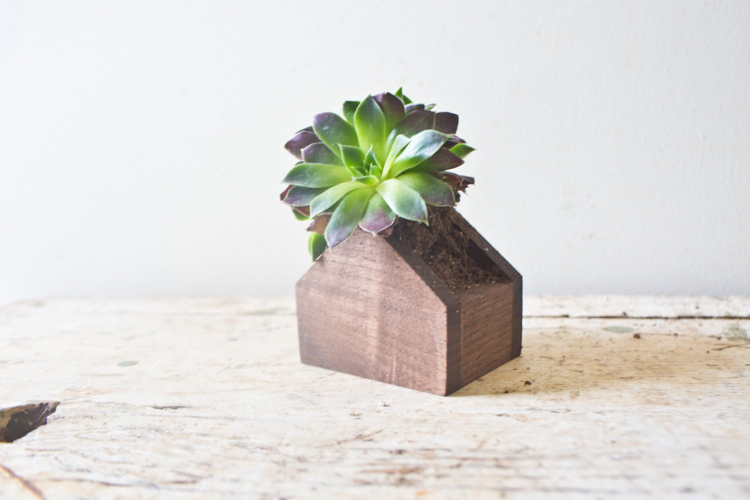 House Planter in Walnut