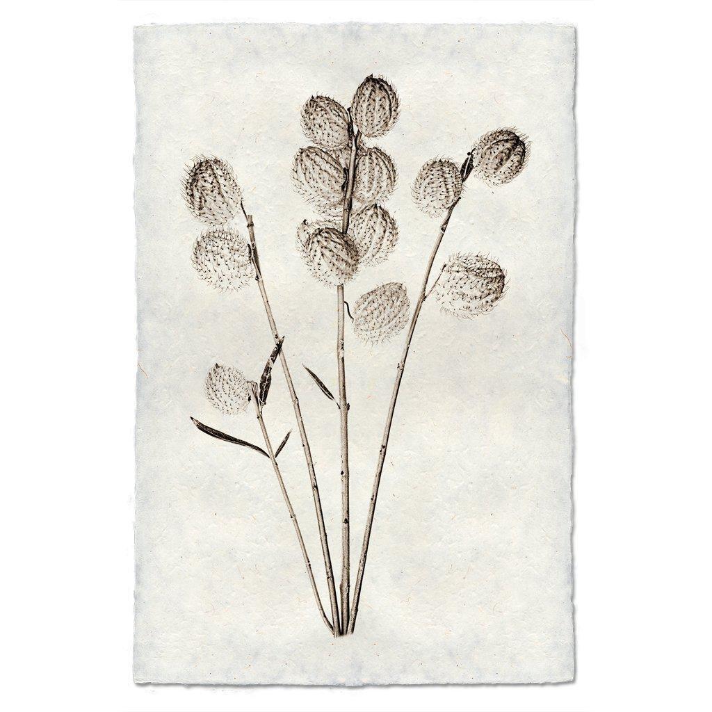 Milkweed 9x14 Print on Nepalese Paper
