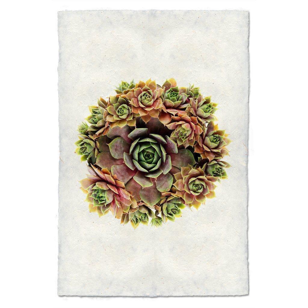 Succulent #1Print S. Pupureum