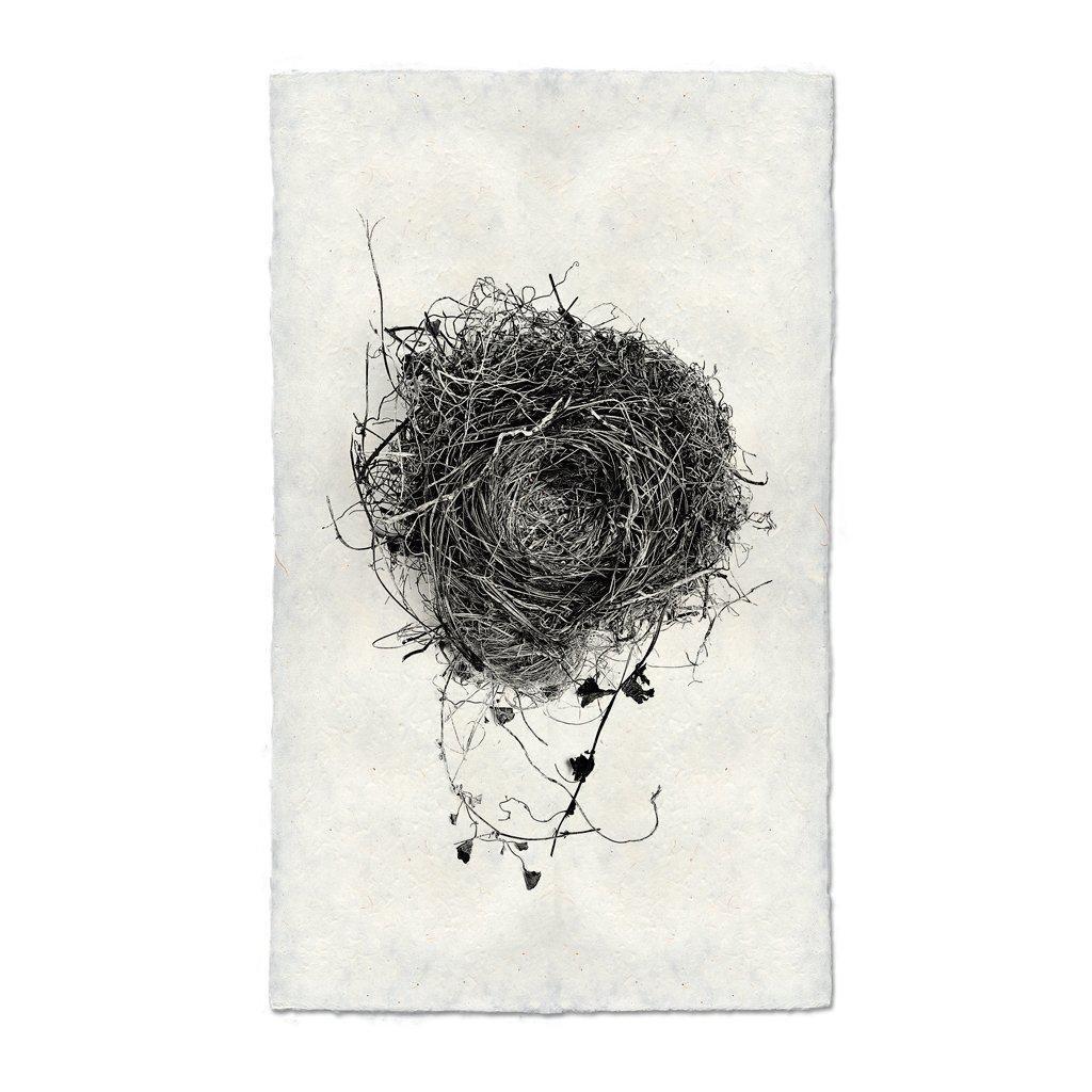 Nest Study #3 Print