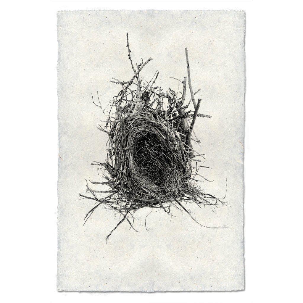 Nest Study #12 Print