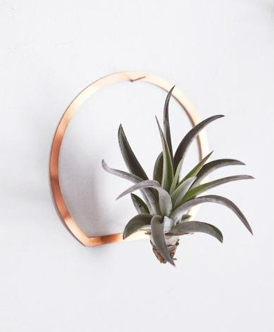 Arch Brass Air Plant Holder