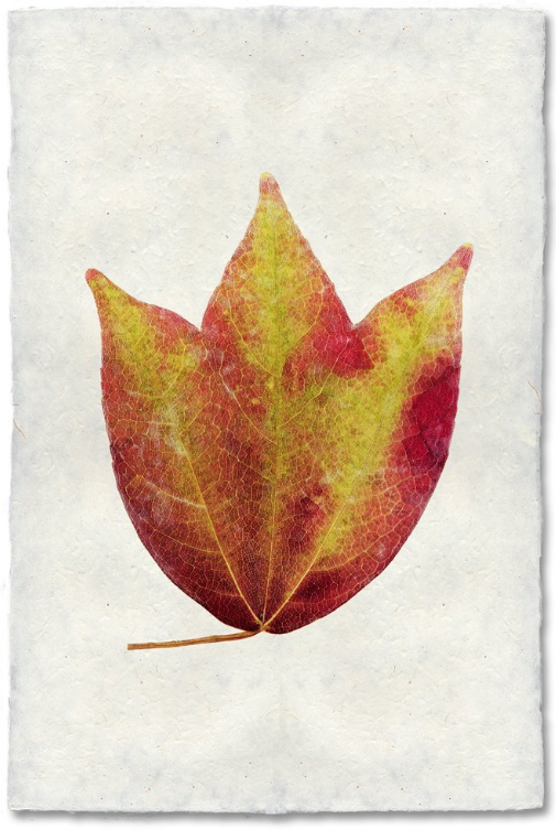 American Cranberry 20x30 Print on Nepalese Paper