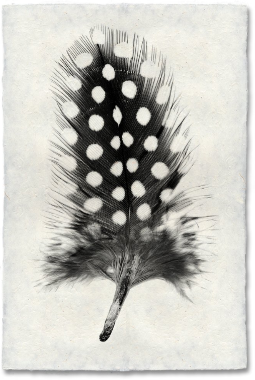 Feather Study #1 9x14 Print on Nepalese Paper