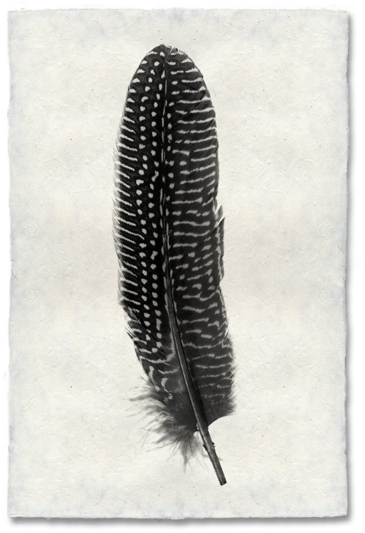 Feather Study #5 9x14 Print on Nepalese Paper