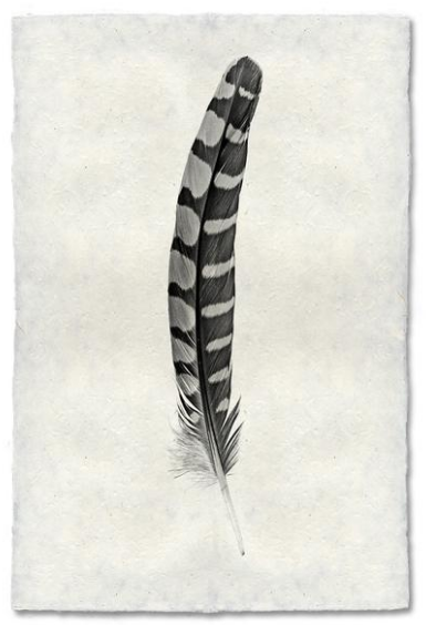 Feather Study #12 9x14 Print on Nepalese Paper