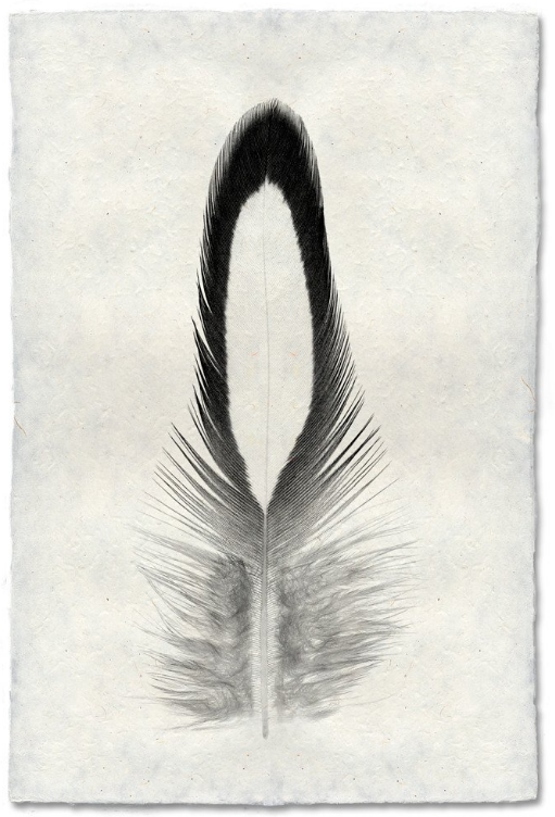 Feather Study #14 9x14 Print on Nepalese Paper