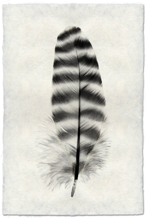 Feather Study #17 20x30 Print on Nepalese Paper