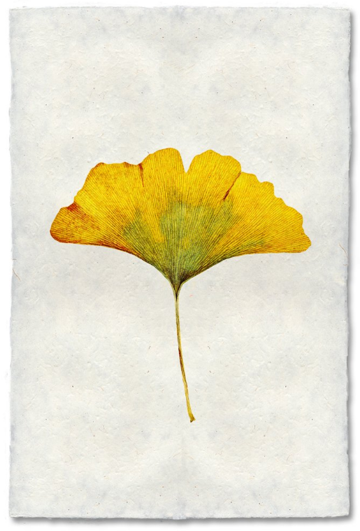 Gingko 9x14 Print on Nepalese Paper