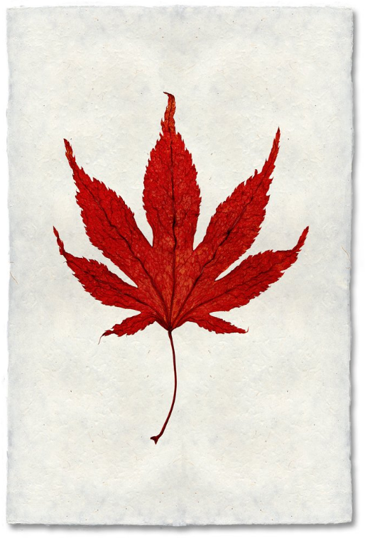 Japanese Maple 9x14 Print on Nepalese Paper