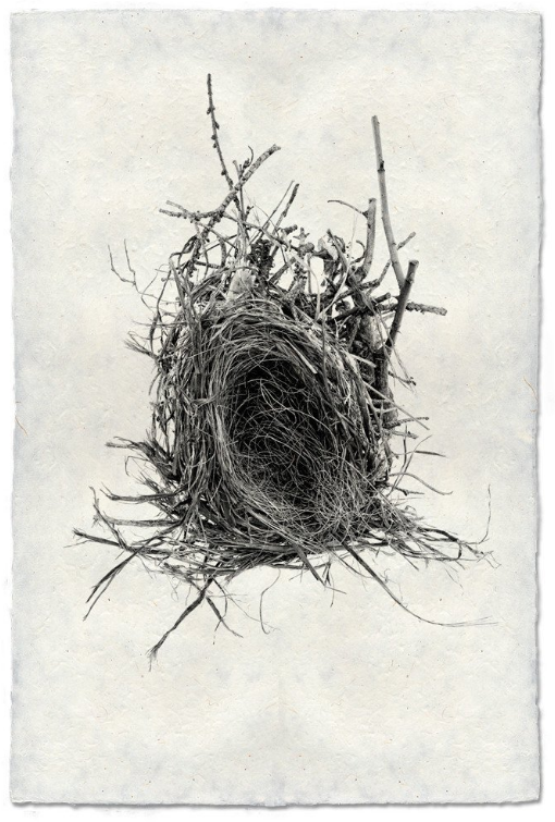 Nest Study #12 20x30 Print on Nepalese Paper