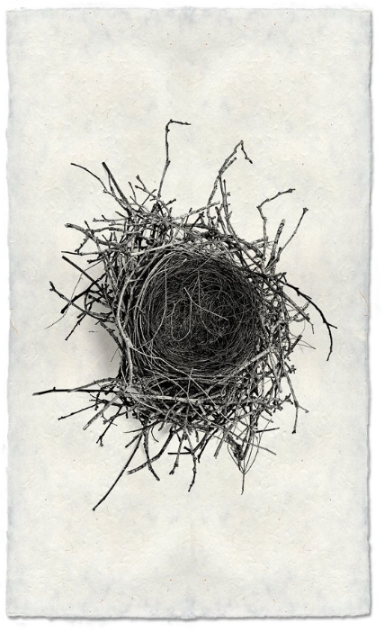 Nest Study #2 9x14 Print on Nepalese Paper