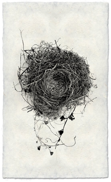 Nest Study #3 9x14 Print on Nepalese Paper