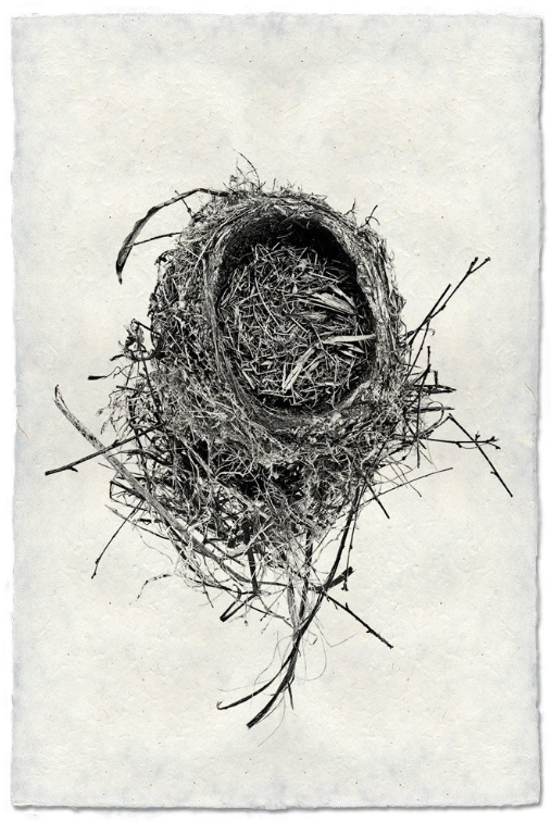 Nest Study #11 9x14 Print on Nepalese Paper