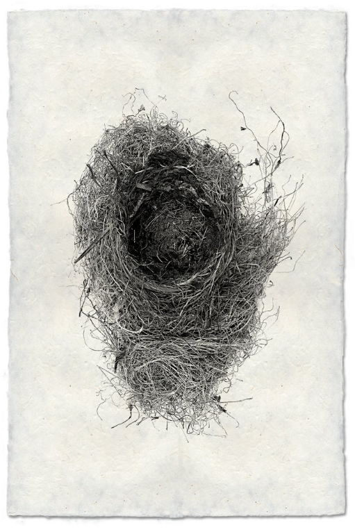 Nest Study #6 20x30 Print on Nepalese Paper
