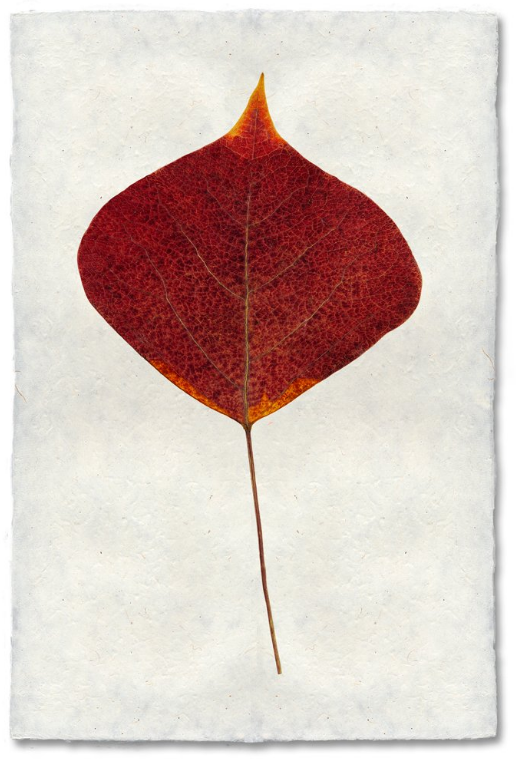 Smoke Tree 9x14 Print on Nepalese Paper