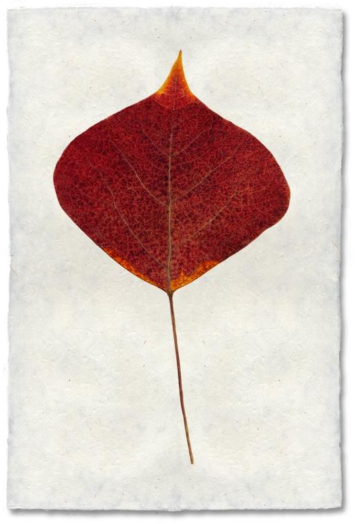 Smoke Tree 9x14 Print on Nepalese Paper