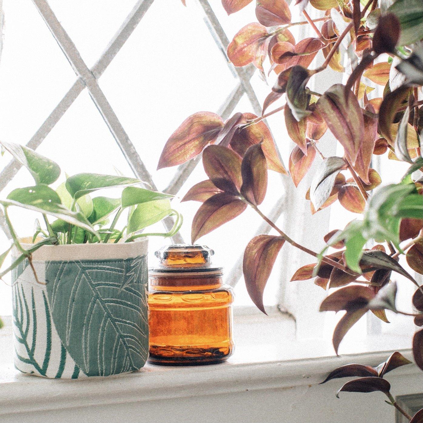 Croton Green Plant Sax
