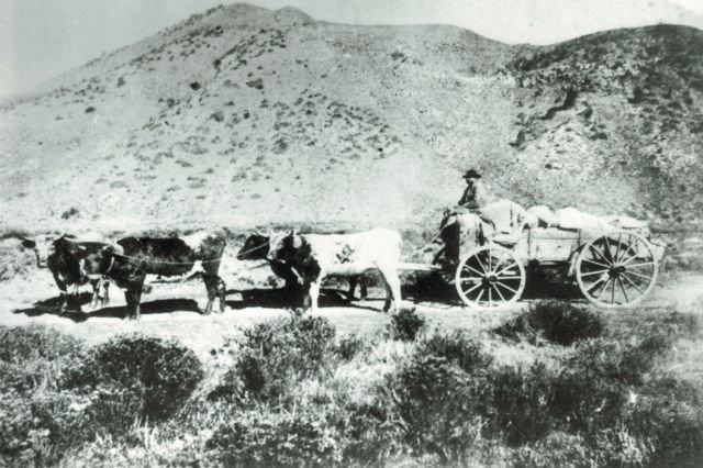 Nate Shore on wagon - Hot Sulphur Springs