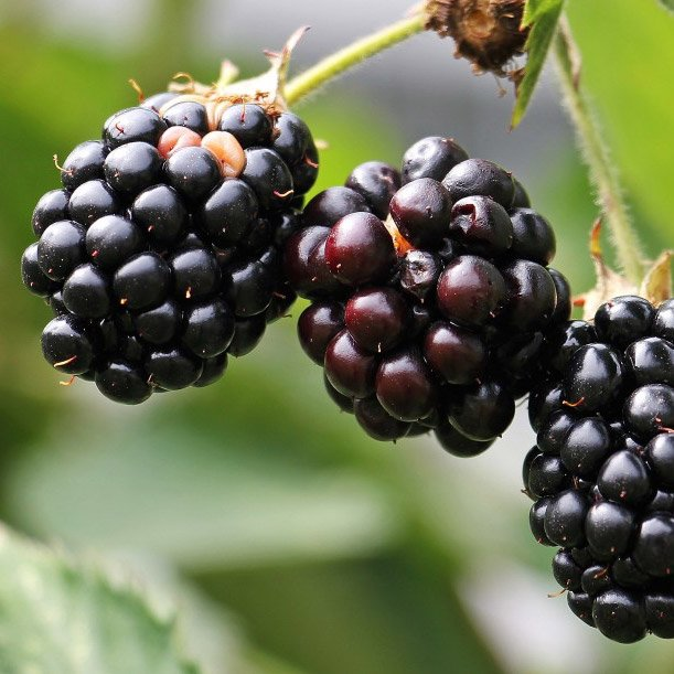 Blackberry OMG