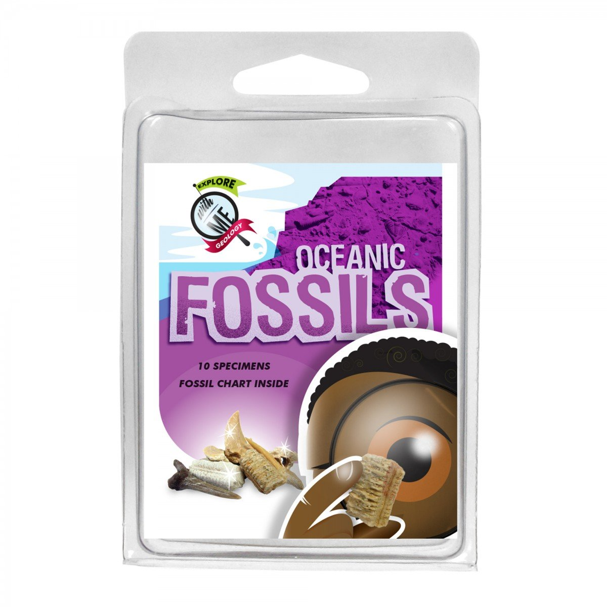 Explore With Me Geology Oceanic Fossil Assortment
