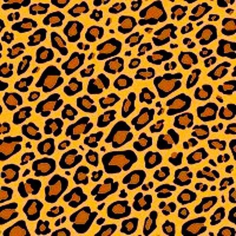 03- Scarlet - Cheetah